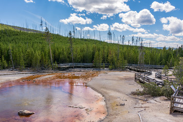Norris Geyser Basin is the hottest, oldest, and most dynamic of Yellowstone's thermal areas, Yellowstone National Park  Wyoming, USA