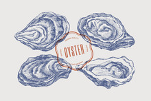 Big Set Of Hand-drawn Oysters ...