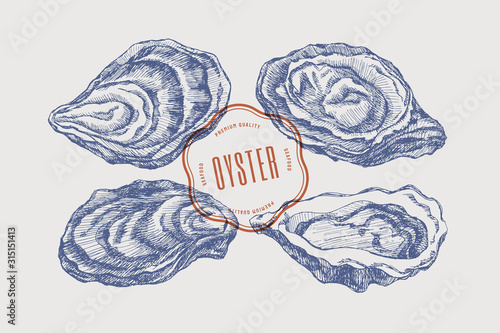 Big set of hand-drawn oysters from different foreshortening vector illustration. Seashells in engraving style on a light background. The menu design element of a fish restaurant, market or store.