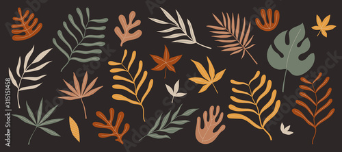 Set of exotic palm leaves of various shapes and sizes vector illustration on ...