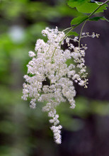 A Cascade Of Small Flowers In ...