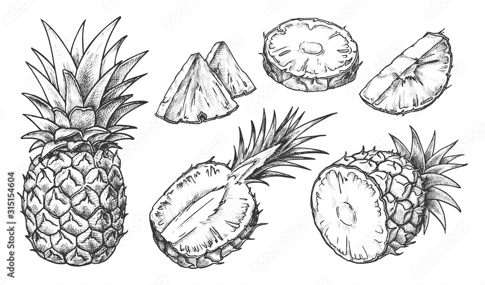 Fototapeta Sketch of pineapple. Isolated hand drawn ananas