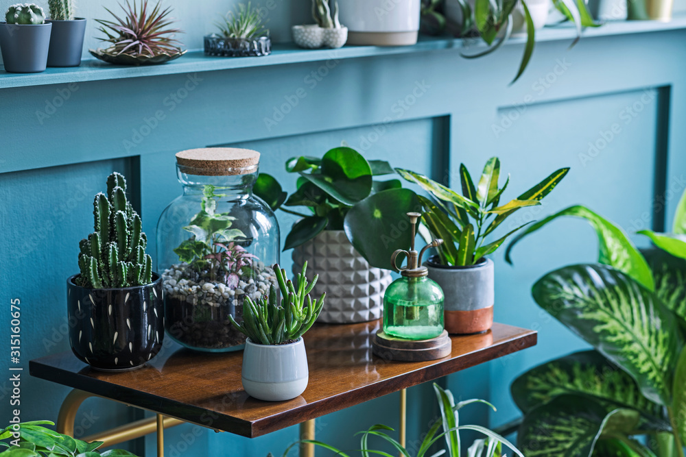 Fototapeta Stylish living room interior filled a lot of beautiful plants, cacti in different design pots on the brown retro shelf. Composition of home garden jungle. Modern home decor. Floral concept. Template.