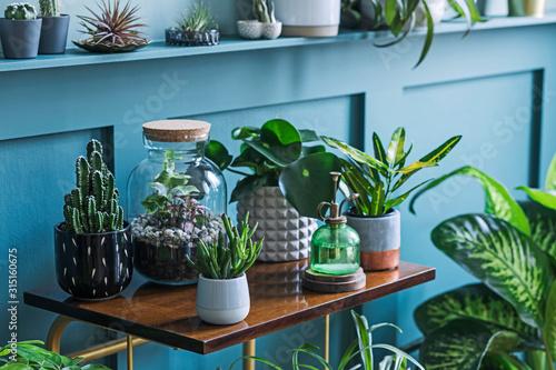Stylish living room interior filled a lot of beautiful plants, cacti in different design pots on the brown retro shelf Tapéta, Fotótapéta