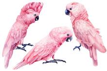 Set Of Cockatoo, Parrot Pink I...