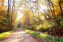 Beautiful Scenic Autumn Path Through The Woods