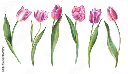 Photo Handpainted watercolor flowers  tulips in vintage style