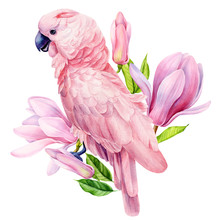 Pink Cockatoo Parrot And Magnolia Flowers, Isolated White Background, Watercolor Illustration, Hand Drawing Poster