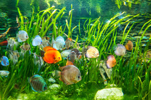 Fresh Water Aquarium With Colo...