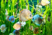 Fresh Water Aquarium With Colo...