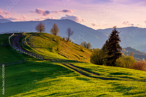 Fototapeta mountainous rural landscape in evening light. wooden fence along the path through rolling hills in fresh green grass. beautiful scenery in springtime. purple clouds on the sky obraz