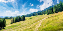 Forested Carpathian Mountains ...