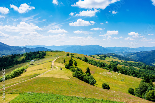 Fototapeta mountain rural landscape in summertime. country path winding off in to the distant ridge. rolling hills with grass fields and meadows. calm sunny weather with fluffy clouds on the blue sky obraz