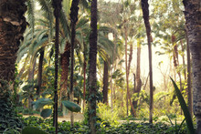 Tropical Forest Landsape With ...
