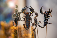 Roasted And Fried Scorpions On...