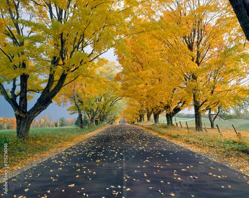 Photo Peacham, Road in Autumn, Vermont
