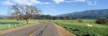 Horses, Santa Ynez Mountains In Spring, Santa Barbara, California