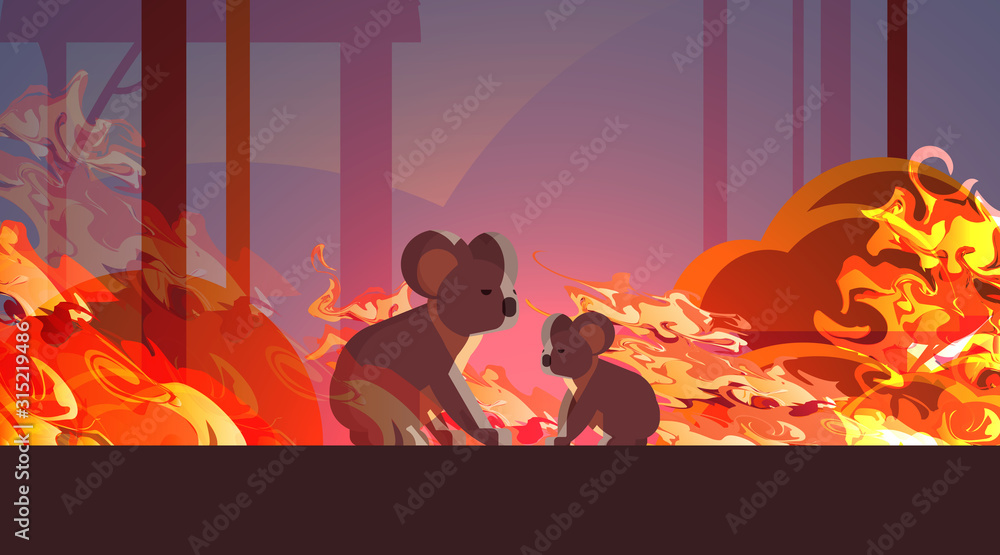 Fototapeta koalas escaping from fires in australia animals dying in wildfire bushfire natural disaster concept intense orange flames horizontal vector illustration