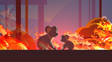 Koalas Escaping From Fires In ...