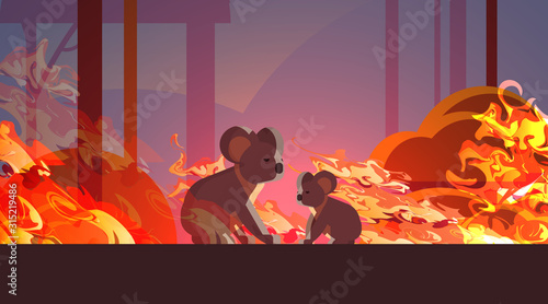koalas escaping from fires in australia animals dying in wildfire bushfire natural disaster concept intense orange flames horizontal vector illustration - 315219486