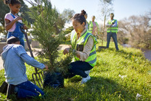 Woman And Children Volunteers Planting Tree At Sunny Campsite