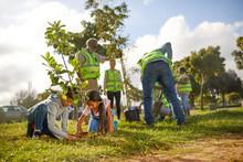 Volunteers Planting Trees In S...