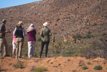 Safari Tour Group Watching Elephants In Sunny Grassland South Africa