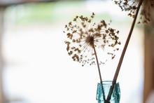 Spiny Plant Stem In Glass Bottle