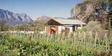 Sunny, Idyllic Vegetable Garden And Rural House
