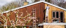 Male Painter On Ladder Paintin...
