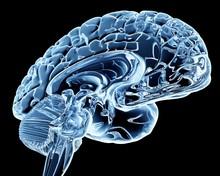 Brain, Computer Artwork