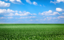 Green Field And Clouds In A Bl...