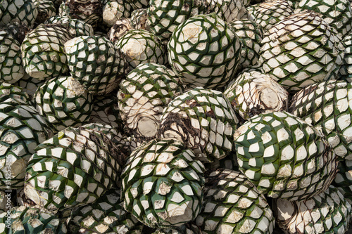Photo El agave ha sido jimado y agrupado en el campo de Tequila.