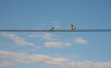 Bird Perched On Wires With Blu...