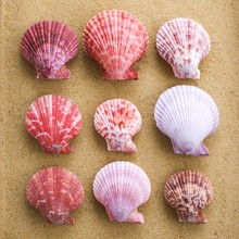 Scallop Shells In Rows