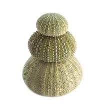 Green Sea Urchin Shells