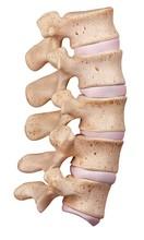 Human Lumbar Spine