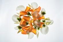 Back Lit Flower Petals
