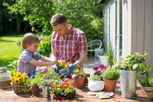 Father And Son Potting Up Plants