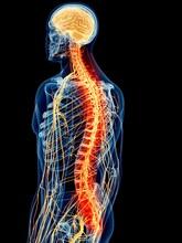 Human Spinal Nerve Pain