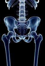 Human Hip Joint