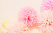 Leinwandbild Motiv Beautiful abstract color white and pink flowers on white background and white flower frame and orange leaves background texture, flowers banner, pink background, colorful white banner happy valentine