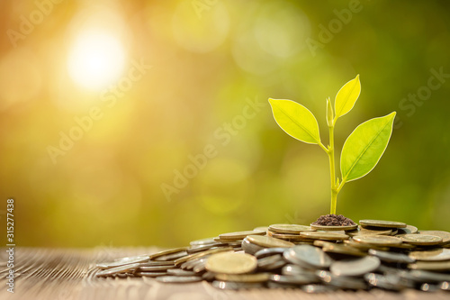 Coin stack with young green sprout on top. Business success, Financial or money growing concept