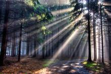 When The Sun Shines Through Th...