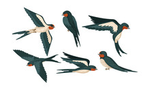 Barn Swallow With Long Tail And Sharp Wings Vector Set