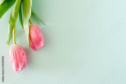 Fototapeta ピンクのチューリップとパステルカラーの背景 obraz