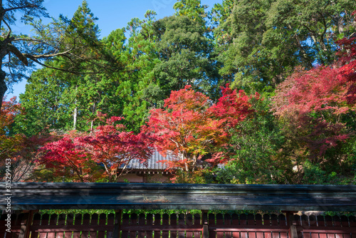 Photo 京都 神護寺の紅葉