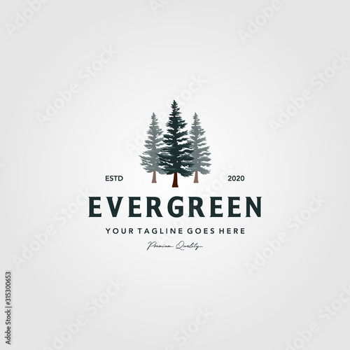 Fotografía pine tree vintage logo evergreen spruce fir vector emblem illustration design