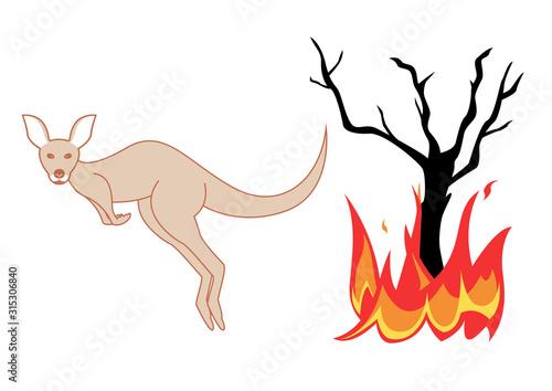 Photo Incendie - kangourou en fuite