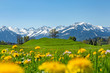 Allgäu - Frühling - Oberstdorf - Löwenzahn - Alpen